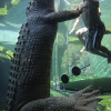 Thumbnail image for Tooth Or Dare? Where To Swim With Crocodiles