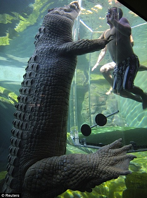 Post image for Tooth Or Dare? Where To Swim With Crocodiles